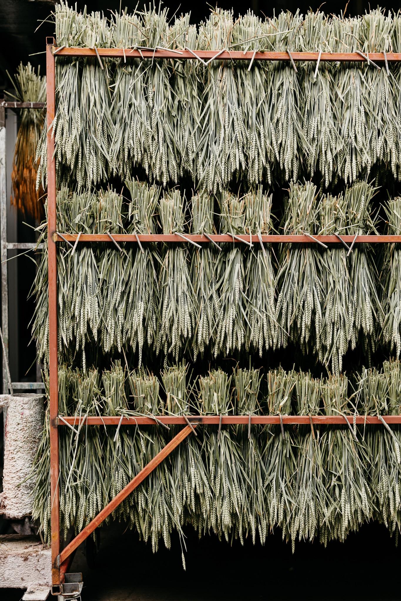 gedroogde tarwe