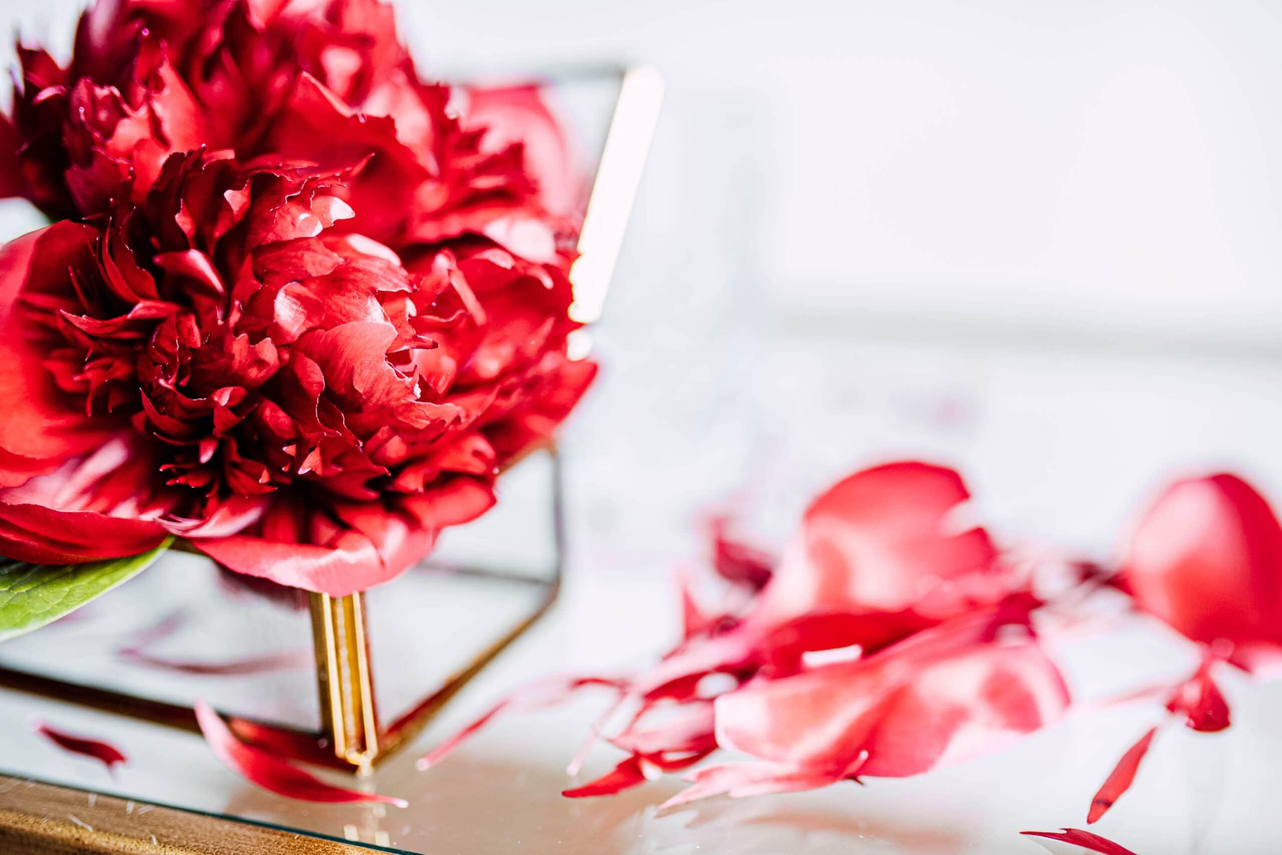red charm pioenroos