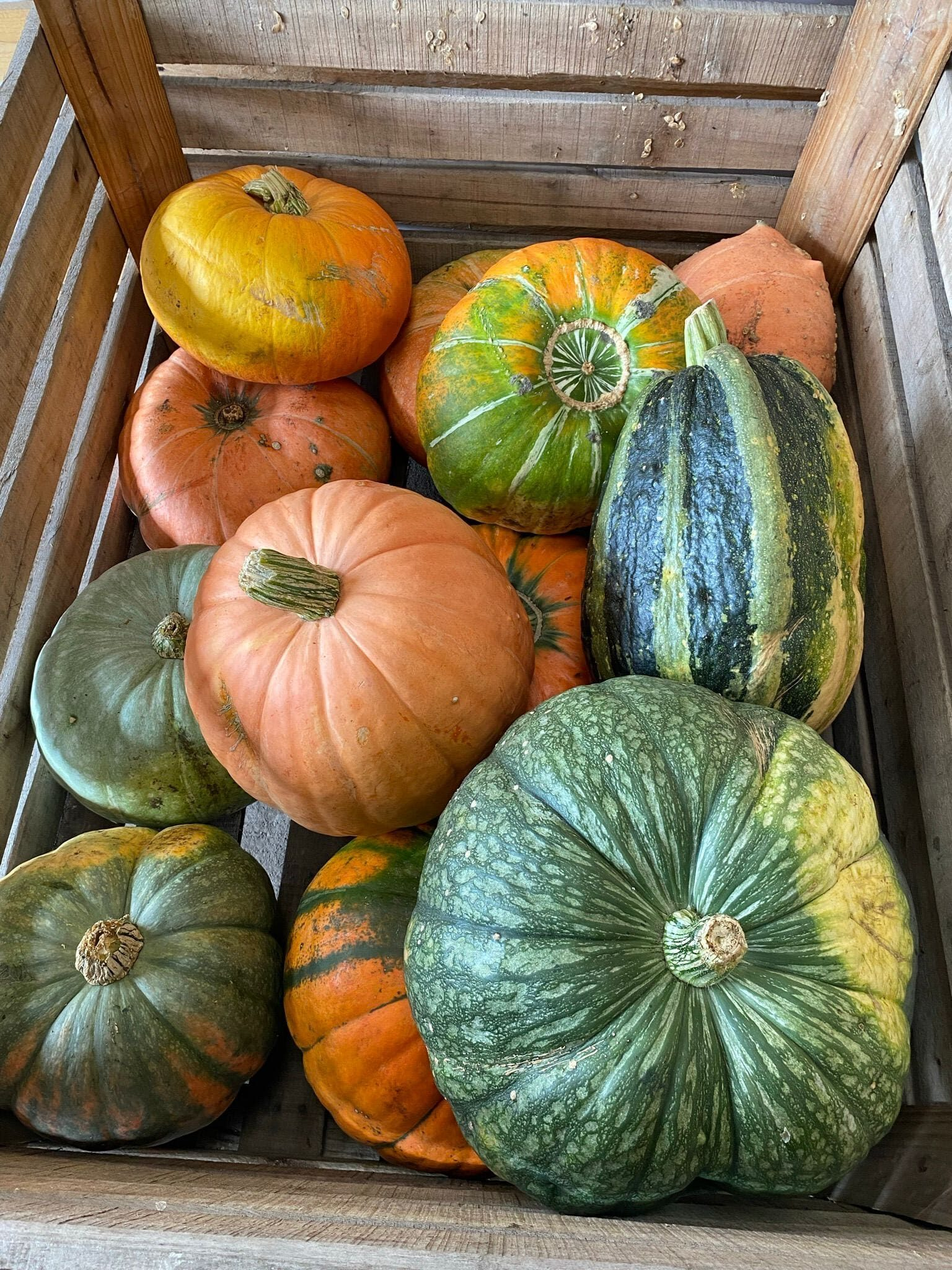 Pompoenen Pumpkins